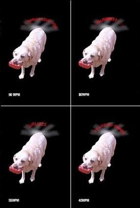 leddogtail.jpg